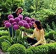 gebraucht pflanzen