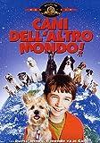Cani dell'altro mondo - MGM - amazon.it