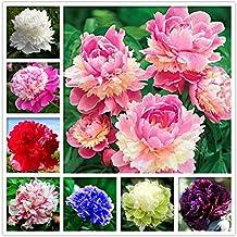 40pcs Semillas de Peonía, Semillas de Flores de Peonía de Color Mezclado, Semillas de