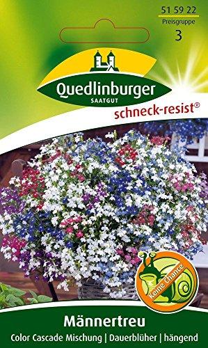 Männertreu Color Cascade Mischung von Quedlinburger Saatgut