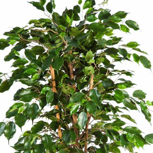 artplants Künstlicher Ficus Exotica mit 495 Blättern, 120 cm – Kunstficus/Kunstbaum / Künstliche Zimmerpflanze