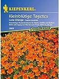 Tagetes tenuifolia Luna Orange