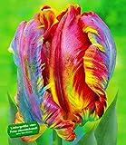 BALDUR-Garten Regenbogen-Tulpen 'Blumex', 10 Zwiebeln