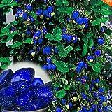 Murieo 100Stk Erdbeere Samen,Duftenden Blüten Bonsai Erdbeersamen, Entzückende Samen für Garten und Balkon 6 Farben (Blau)