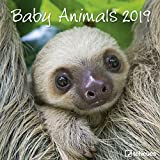 Baby Animals 2019 - Broschürenkalender, Tierkalender, Wandkalender - 30 x 30 cm
