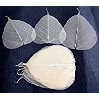 100 Pcs. Skeleton Natural Ficus Religiosa Leaves Artificial Leaves Craft Card Scrapbook Diy Handmade Embellishment Decoration Art by thaigood4you - Ficus Tree Leaves