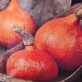 Potiron - type potimarron - 1 sac de graine