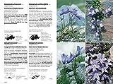 flora helvetica Vergleich