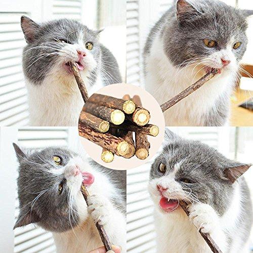 Aolvo Matatabi Katzenminze - Molar Sticks 20 oder 40 Stück, Kaustäbchen, Zähne, Reinigungsset...