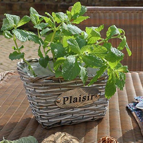 Dibor–French Style für die Home gebeizt Holz und Weiden Pflanzkasten, rechteckig–Eine ideal 5. Hochzeitstag Geschenk Idee–H12x W21x 14cm