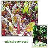 35 semillas / pack, semillas de remolacha roja de la hoja Semilla Líder de plantas de jardín de vegetales