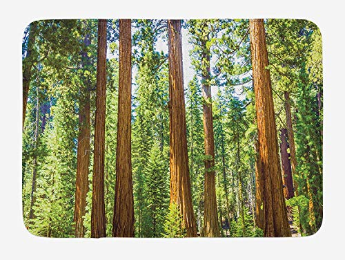 OQUYCZ National Parks Bath Mat, Up View of Tree Branches in Scenic Springtime Conifers Sequoia Art Prints, Plush Bathroom Decor Mat with Non Slip