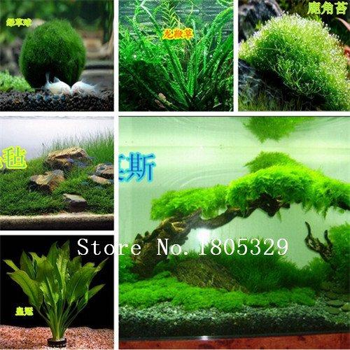 Hot vente gazons Semences à gazon (Golf Terrains de soccer Villa) Graines catégorie spéciale Evergreen Lawn 1200 Seeds
