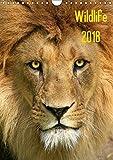 Wildlife 2018 (Wandkalender 2018 DIN A4 hoch): Wildlife-Fotografie (Monatskalender, 14 Seiten ) (CALVENDO Tiere) [Kalender] [Apr 01, 2017] Klingebiel, Jens