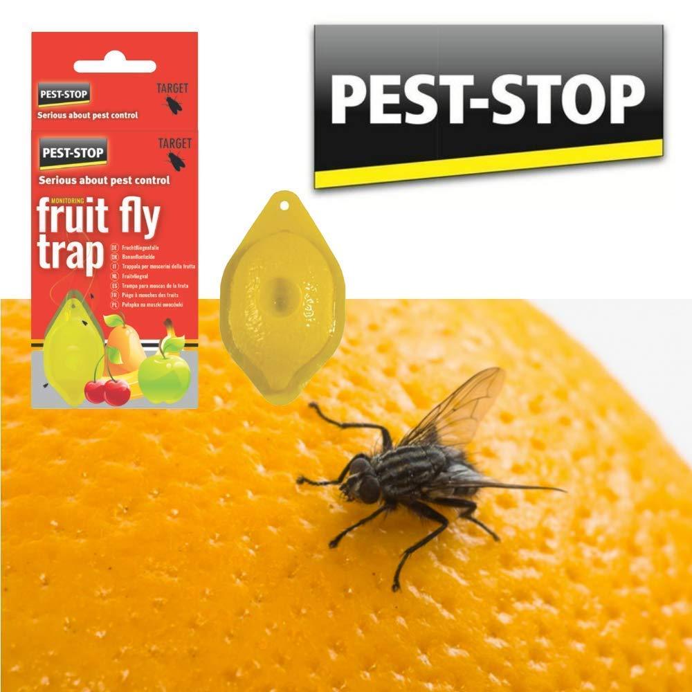Rc Ocio Fruit Fly Trap Cattura zanzare, Mosche e Insetti  Attractant Senza  Veleno o pesticidi e discreto Efficace al 100%