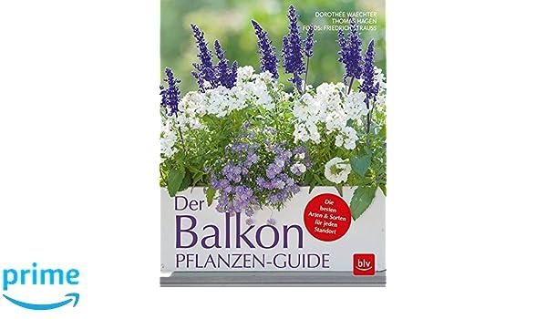Der Balkonpflanzen Guide Die Besten Arten Sorten Fur Jeden