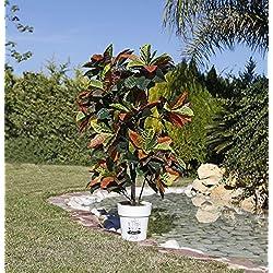 Planta artificial croton 140 cm altura, Catral 74010003