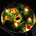 esto24-LED Pilz Lichterkette Fliegenpilz 10 Pilze Batterie Leuchtpilze Weihnachten Deko