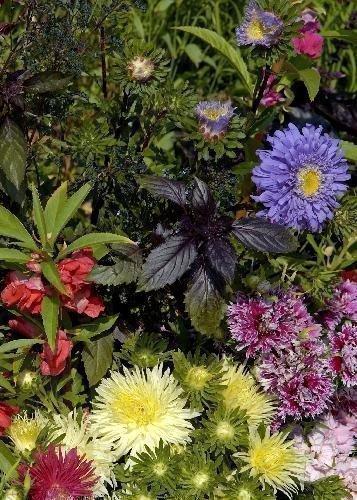Tropica - Wildblumen - Italien - Sonne der Toscana (11 Sorten) - 1000 Samen