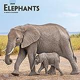 Elephants - Elefanten 2019 - 18-Monatskalender (Wall-Kalender)