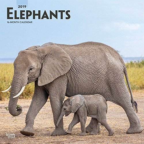 Elephants 2019 Calendar