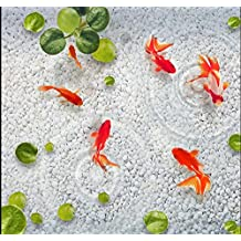300cmX250cm de sol pvc 3d photo personnalisé mural murale lotus de lentilles d'eau galets peinture poisson photo prix wallpaper 3d pour les murs