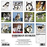 Image de Just Siberian Huskies 2017 Calendar