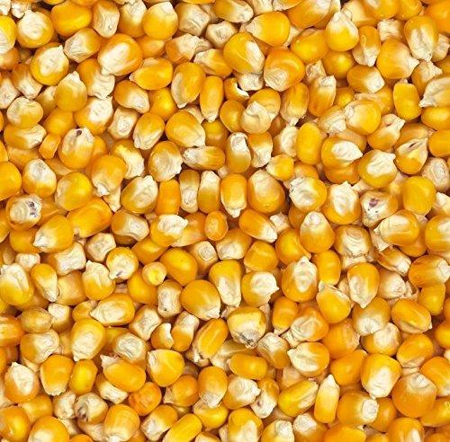 25kg Mais gelb ganz/Cribs - hochwertig und gereinigt (Getrocknete Futtermittel Mais)
