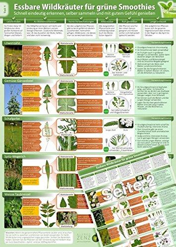Essbare Wildkräuter für Grüne Smoothies - Erkennungskarte Teil 1 (2018) -Schnell eindeutig erkennen, selber sammeln und mit gutem Gefühl genießen (laminiert - DINA4) (Ein Gutes Gefühl-therapie)