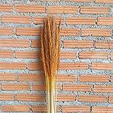 Leewadee Dekobündel für Bodenvasen Trockengesteck Dekogras