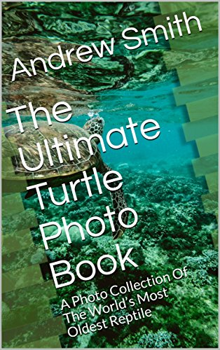 The Ultimate Turtle Photo Book: A Photo Collection Of The World's Most Oldest Reptile (English Edition)