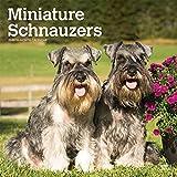 Miniature Schnauzers - Zwergschnauzer 2020 - 16-Monatskalender mit freier DogDays-App: Original BrownTrout-Kalender [Mehrsprachig] [Kalender] (Wall-Kalender)