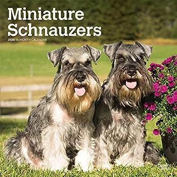 Schnauzers 2020 Calendar