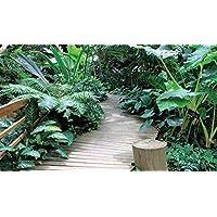Delester Design Ponton en Bois Au Milieu des Plantes Exotiques Tapis, Vinyle, Multicolore, 120 x 70 x 0,2 cm