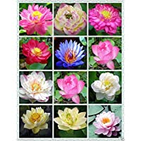 Creative Farmer Lotus Flower Mixed Colour Seeds (Pack of 15 Seeds)