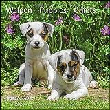Welpen Puppies 2020 - Broschürenkalender - Wandkalender - mit herausnehmbarem Poster