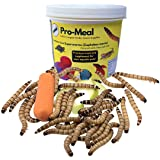 Pro-Meal Live Larvae Big Size Superworms - Hight Protien Treat Food for Aquarium Fishes Like Arowana, Flowerhorn and Birds, R