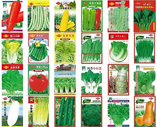 Portal Cool Australien Choy Sum 1000 Seeds: Heißer Verkaufs-China-Garten-Yard Topfgemüsesamen Organisch Nicht-G-Original- und Gemüsegarten Samen