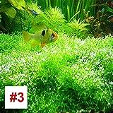 Hanbaili 2 sacs de semences aquatiques de plantes aquatiques haut de gamme, 1000Pcs / sac de semences d'herbe aquatique pour les aquariums de jardins à la maison, faciles à cultiver