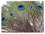 #5: Peacock Feathers Real mor pankh Original Natural Premium Quality (12-15Inch)