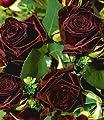 BALDUR-Garten Edelrosen 'Black Baccara®', 1 Pflanze von Baldur-Garten - Du und dein Garten