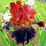50pcs / bag semillas de orquídeas Iris, planta del iris mariposa bonsai semillas, semillas de flores perennes, plantas para el jardín de 7