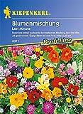 "Blumenmischung""Last Minute"""