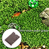 Daxibb Wasserpflanze Samen Aquarium Wasser Zier Aquarium Kurze Perle Gras Decor
