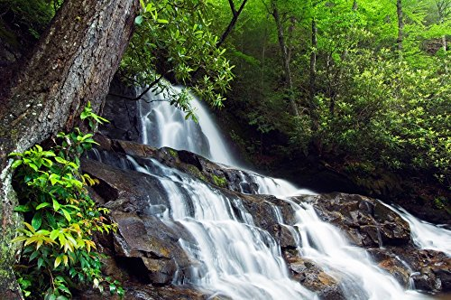 The Poster Corp Panoramic Images - Water Cascading Over Rocky Cliffs Laurel Creek Falls Great Smoky Mountains National Park Tennessee USA. Photo Print (22,86 x 68,58 cm) -