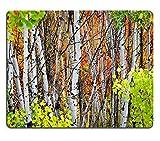 Liili Mauspad Naturkautschuk Mousepad Herbst Laub inkl. Birke und Ahorn Bäume mit Pinienwald Bild-ID 22929589
