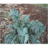 Premier Seeds Direct KAL04 - Semillas para verduras (de reliquia)