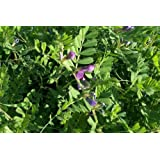 Premier Seeds Direct ORG120 80g Green Manure Tares Organic (Pack of 80)