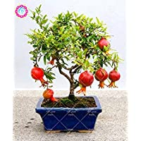 30 pcs Delicious Non-GMO Bonsai Pomegranate Seeds Perennial Indoor Fruit Tree Seeds Super Sweet Fruit Seeds For Home Garden