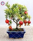 30 pz Delicious Non-GMO Bonsai melograno semi perenni Indoor Semi Albero da frutto semi Super dolce di frutta per il giardino domestico